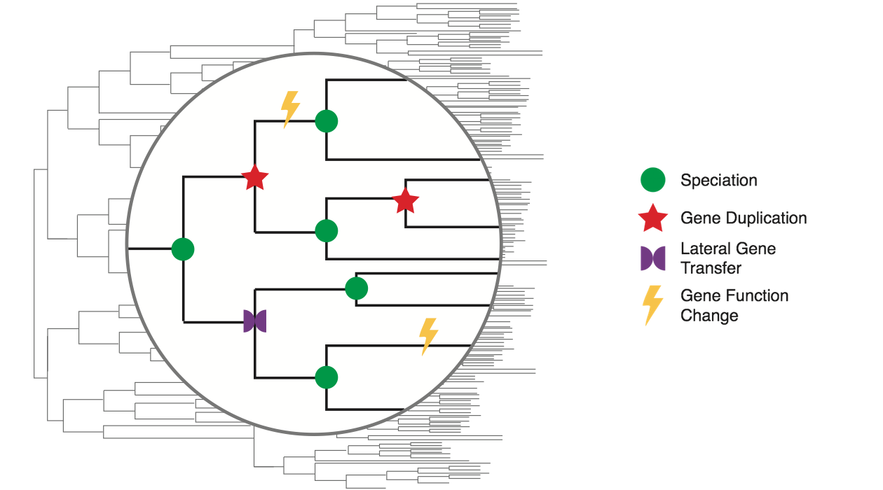 integrated evolutionary and functional history of all sequenced genes